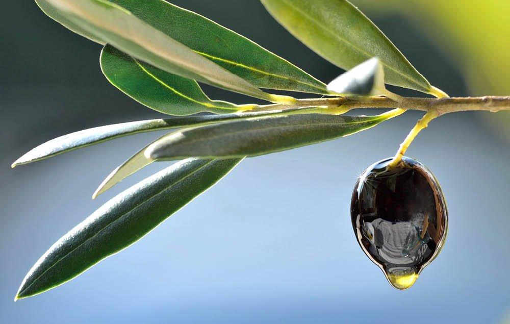 Talvo Olive